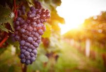 Różowe wino – jak powstaje i skąd wzięła się jego popularność?