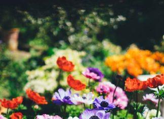 Stojak, wózek czy wieszak – co wybrać, by nawadnianie ogrodu przebiegło szybko i sprawnie?